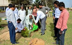 Chairman PQA in plantation ceremony - 4